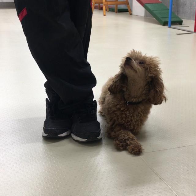 東京ブレーメン動物専門学校 オープンキャンパス!ブレーメンを体験しよう!2