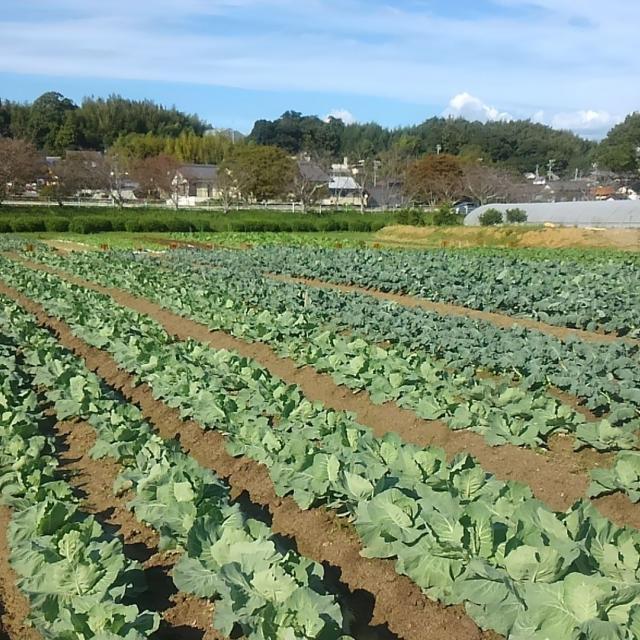 秋の風吹きぬける、本校農場での「農業」体験♪