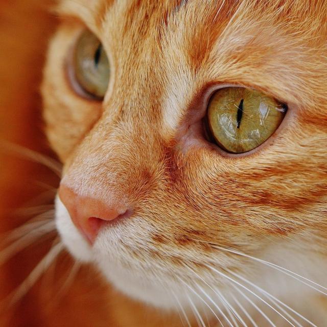 YICビジネスアート専門学校 6/16(日)【ペット】ネコちゃんとふれあいながら観察しよう1