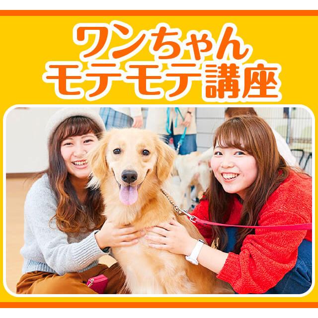 大阪ビジネスカレッジ専門学校 ワンちゃんモテモテ講座1