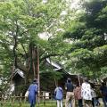 日本自然環境専門学校 樹木医と行く!巨木ツアー