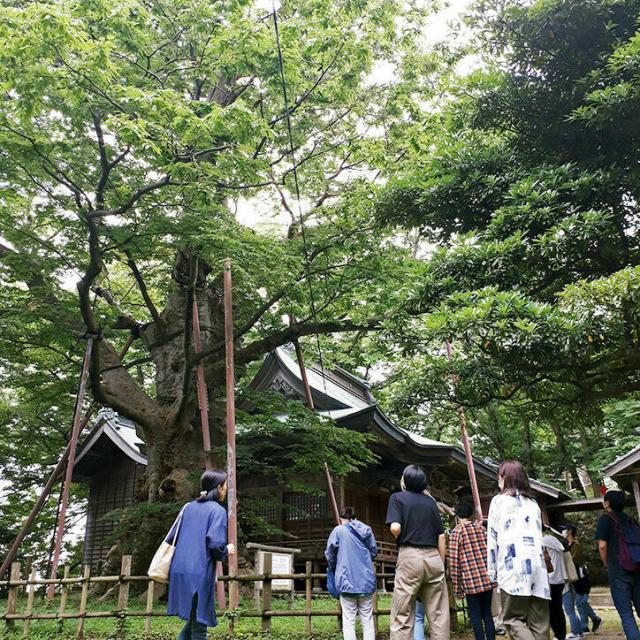 日本自然環境専門学校 樹木医と行く!巨木ツアー1
