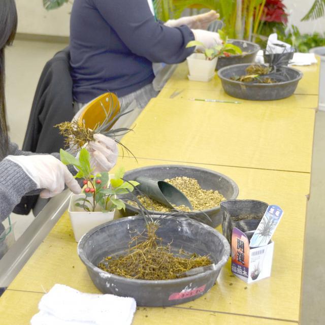 日本ガーデンデザイン専門学校 お部屋で楽しもう!インドアグリーンの選び方と育て方3