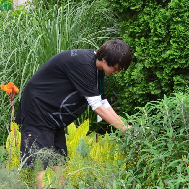 日本ガーデンデザイン専門学校 花壇のお手入れのコツ4