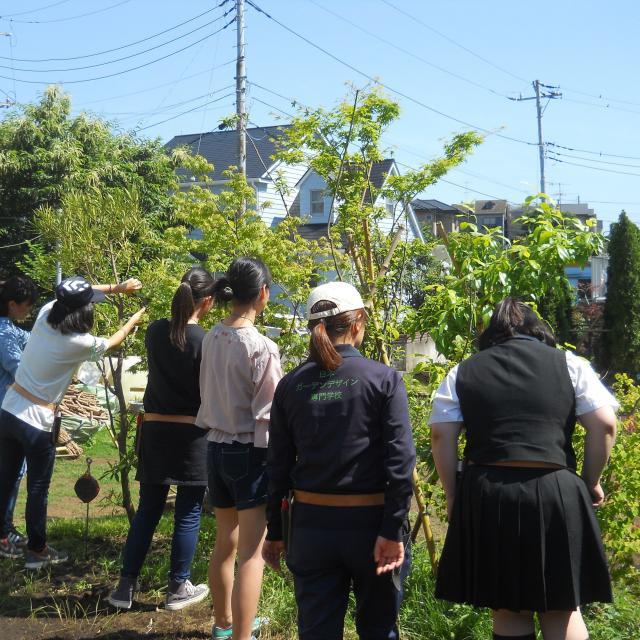 日本ガーデンデザイン専門学校 在校生がエスコート 樹木の剪定3