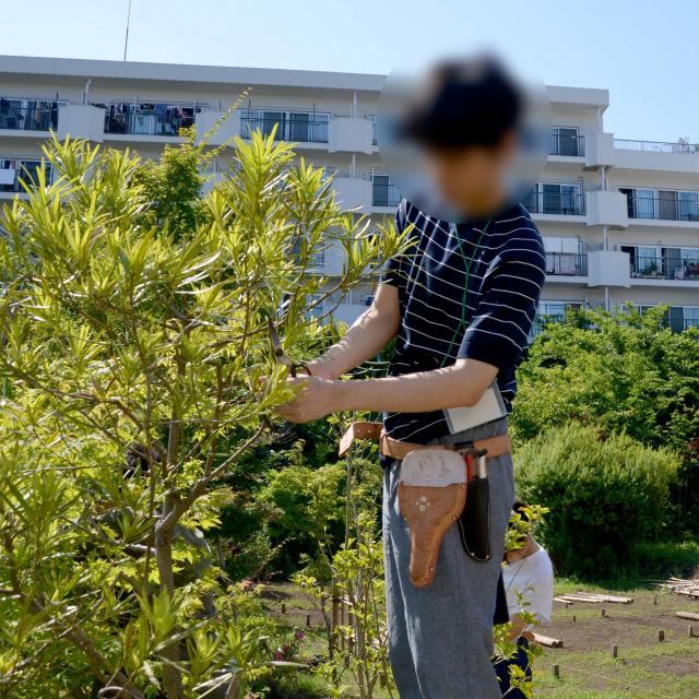 日本ガーデンデザイン専門学校 在校生が教える 庭の樹木の剪定2