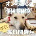 北海道どうぶつ・医療専門学校 【WEB開催】 オンライン個別相談