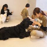 大型犬トレーニングの詳細