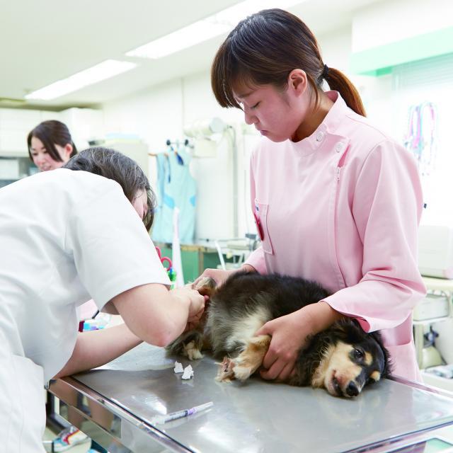 ペットビジネス学科【8月体験】可愛い犬たちに会える♪