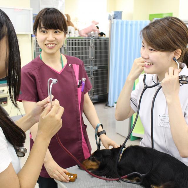 国際動物専門学校 春キャン2