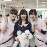 愛犬美容学科 本気で動物に向き合うJKC推薦指定校の体験入学の詳細