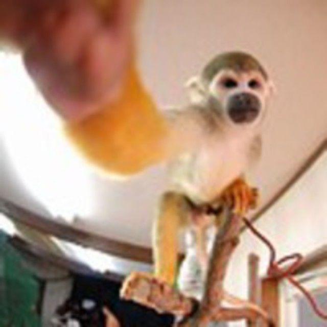 【H:動物園飼育スタッフ★体験】飼育スタッフになるには♪