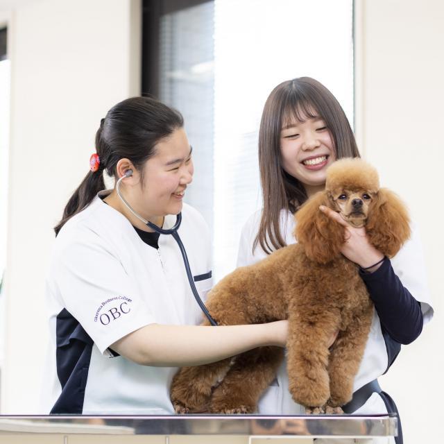 専門学校岡山ビジネスカレッジ 愛犬美容・看護学科オープンキャンパス4