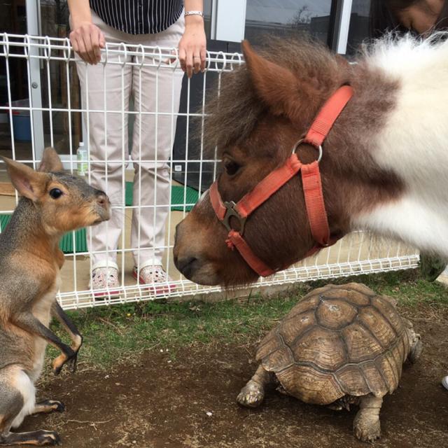 専門学校ちば愛犬動物フラワー学園 オープンキャンパスinおゆみ野ドッグサイト2