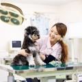 大阪ビジネスカレッジ専門学校 まずは動物看護師の仕事を知ろう!動物看護師体験