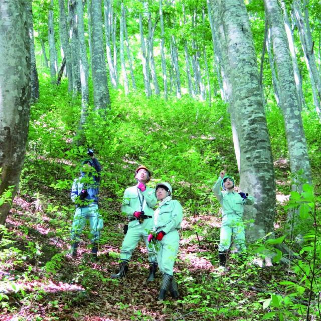 日本自然環境専門学校 森林の中で働きたい!森を守りたい!1
