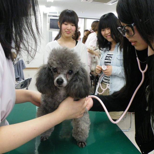 愛犬美容看護専門学校 半日オープンキャンパス☆時間のない方もお気軽に体験できます♪4