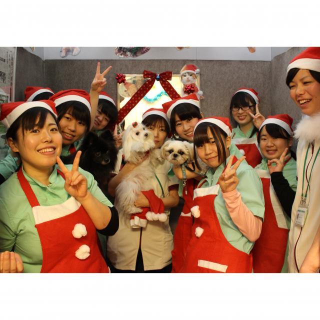 大宮国際動物専門学校 ★☆ クリスマスイベント ☆★1
