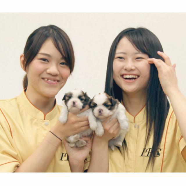 愛知ペット専門学校 ショップスタッフのお仕事体験!4