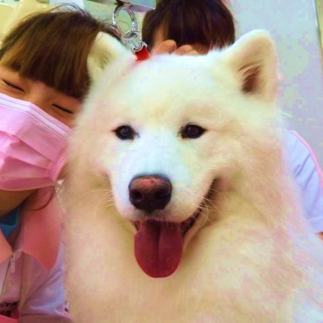 吉田学園動物看護専門学校 【トリマー学科】オープンキャンパス!4