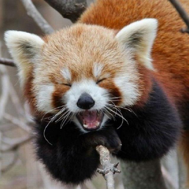 九州動物学院 第6回 動物園の方の話しを聞こう!3