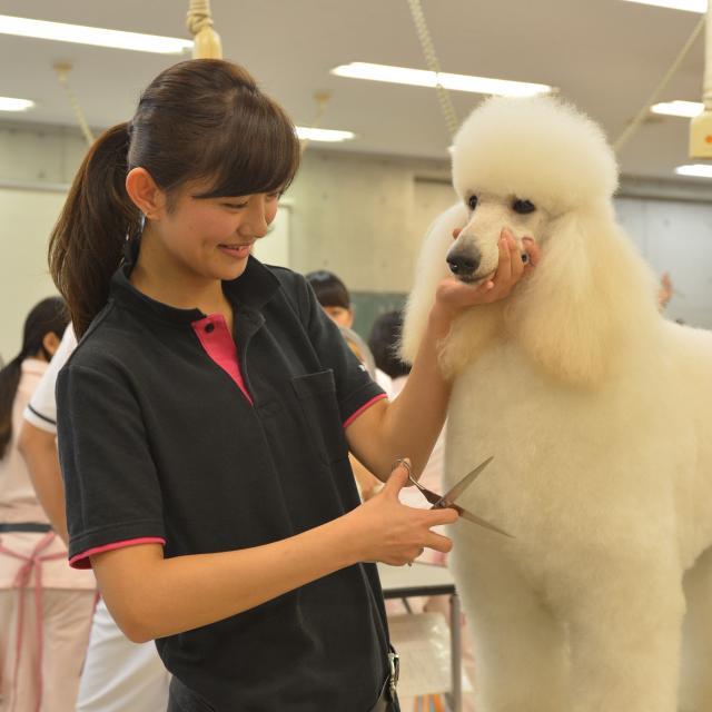 専門学校ちば愛犬動物フラワー学園 オープンキャンパスinおゆみ野ドッグサイト4