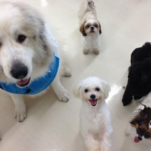 専門学校ちば愛犬動物フラワー学園 オープンキャンパス3