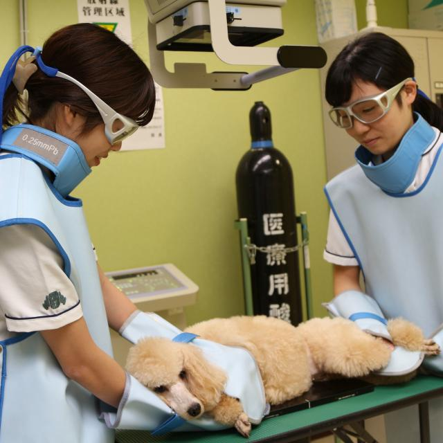 大宮国際動物専門学校 『動物看護系学科』学科別体験入学4