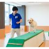 大阪ビジネスカレッジ専門学校 はじめてでも大丈夫!ドッグトレーナーのおシゴト体験