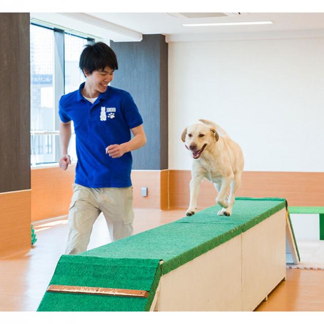 大阪ビジネスカレッジ専門学校 ドッグトレーナーのお仕事体験1