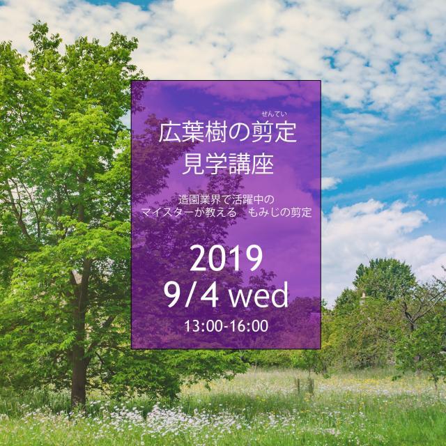 札幌工科専門学校 職業見学講座 造園マイスターが教える もみじの剪定1