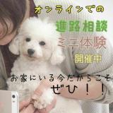 【個別相談】柴犬コース (45分間) ※延長ありの詳細