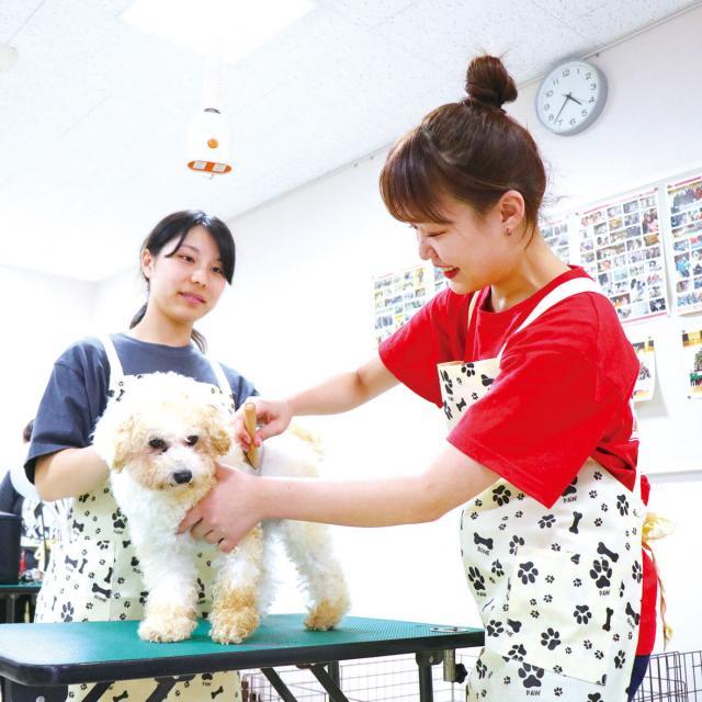 専門学校 九州スクール・オブ・ビジネス 2月の体験入学(トリマー/動物看護/ドッグトレーナー)1