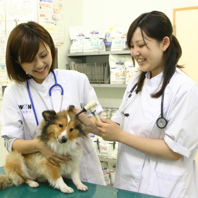 国際ペットワールド専門学校 学校付属動物病院で受付・診察補助・検査をやってみよう!3