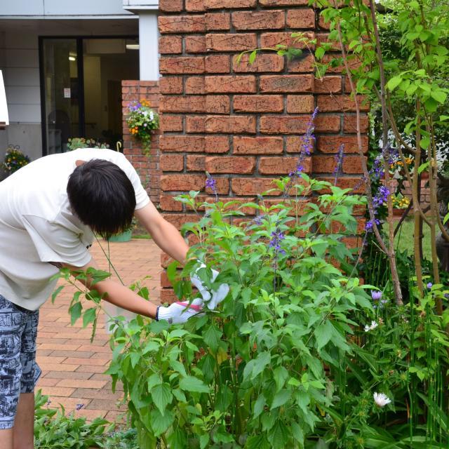 日本ガーデンデザイン専門学校 花壇のお手入れのコツ3