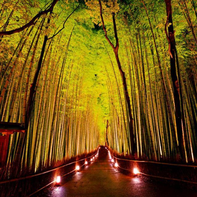 西鉄国際ビジネスカレッジ 日本の人気観光地&穴場スポットを一堂に集めました!3