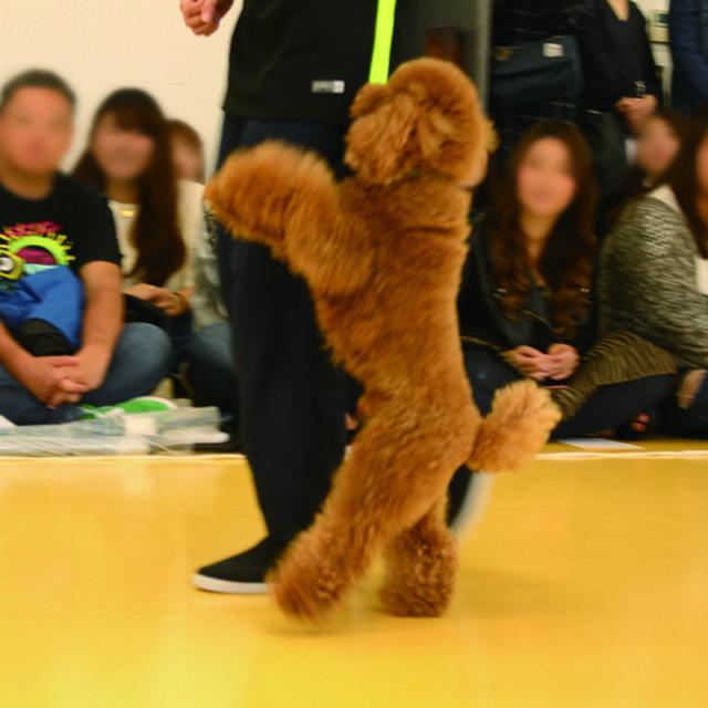 専門学校ビジョナリーアーツ 8/20(月)ドッグダンスにチャレンジ!1