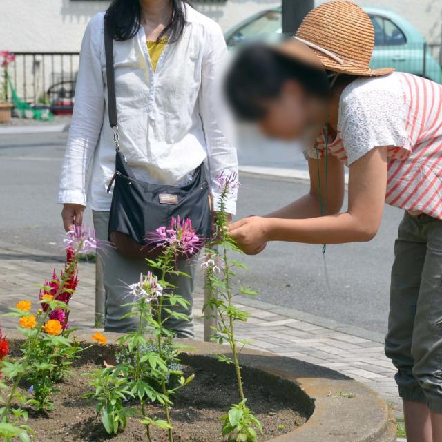 日本ガーデンデザイン専門学校 花壇管理のコツ3
