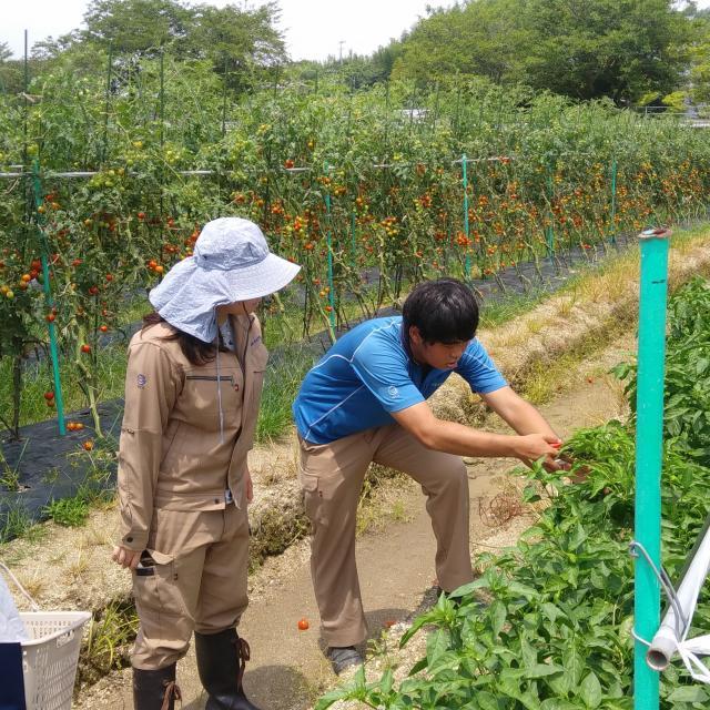 オイスカ開発教育専門学校 夏野菜の収穫体験♪3