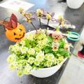 「秋~冬の植栽のカラーコーディネート」