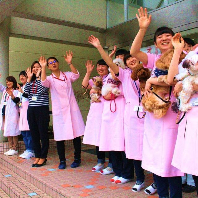 吉田学園動物看護専門学校 【トリマー学科】オープンキャンパス!1