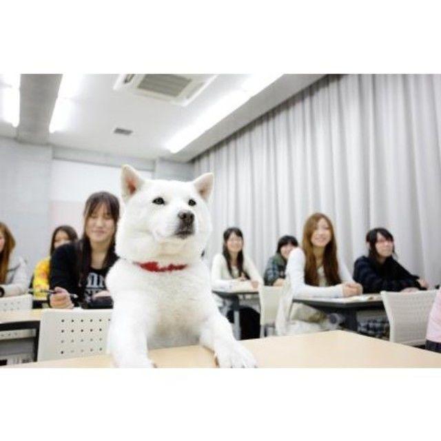 専門学校ちば愛犬動物フラワー学園 6/24オープンキャンパス~カイくん来校♪~1