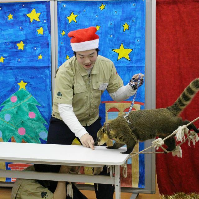 国際動物専門学校 クリスマスイベント3