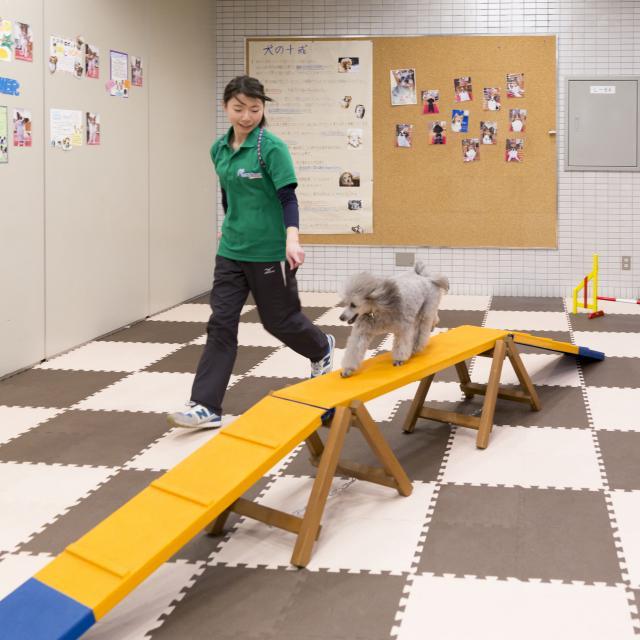 仙台総合ペット専門学校 ペットといっしょにオープンキャンパス!1