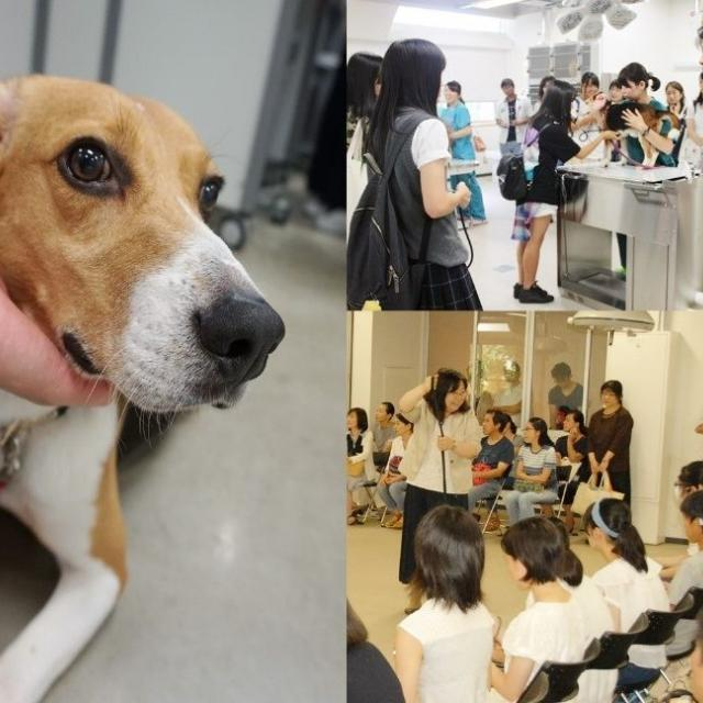 日本獣医生命科学大学 8/18(土)・8/19(日)オープンキャンパスを開催します!3