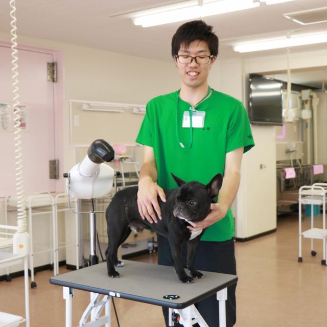 YIC京都ペット総合専門学校 動物マッサージ&レントゲン実習体験1