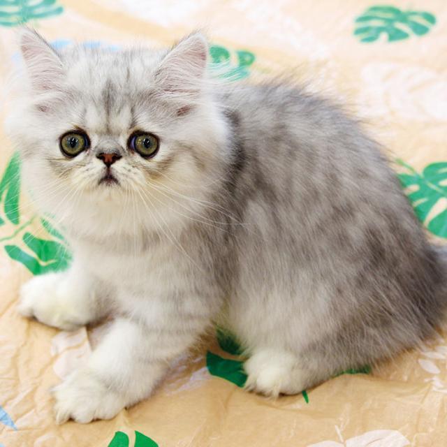 大阪ビジネスカレッジ専門学校 本気で猫を愛でよう♪1