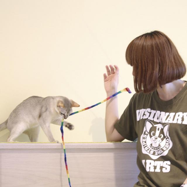専門学校 福岡ビジョナリーアーツ 【ペット】ハロウィングッズでニャンコと遊ぼう1