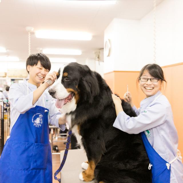 大阪ペピイ動物看護専門学校 8月!鳥とウサギの飼育を学ぼう(1.2年生向け)2