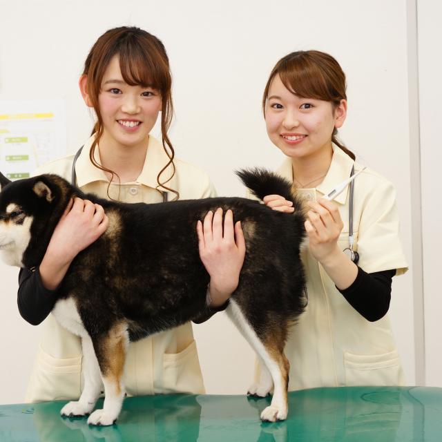 神戸動植物環境専門学校 【D:動物看護師★体験】投薬・検温・脈拍・ペットの健康診断☆1